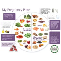 Pregnancy Plate - What to eat during Pregnancy